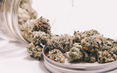 Save Your Money Now With Dailymarijuana.co's Mix And Match Promo