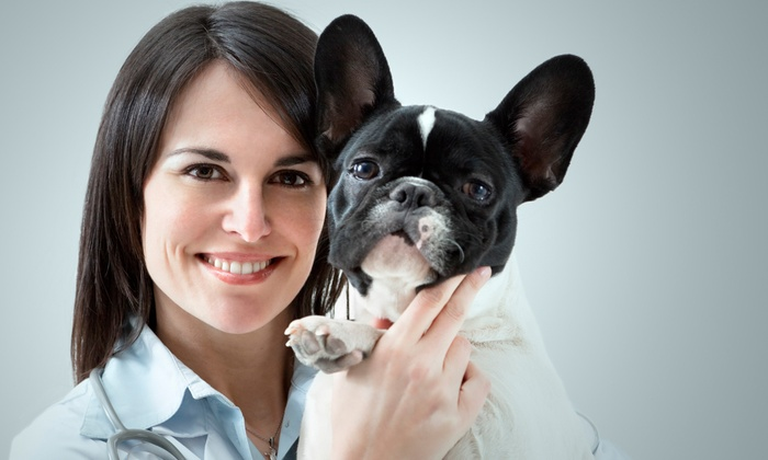 best beauty treatments for pets